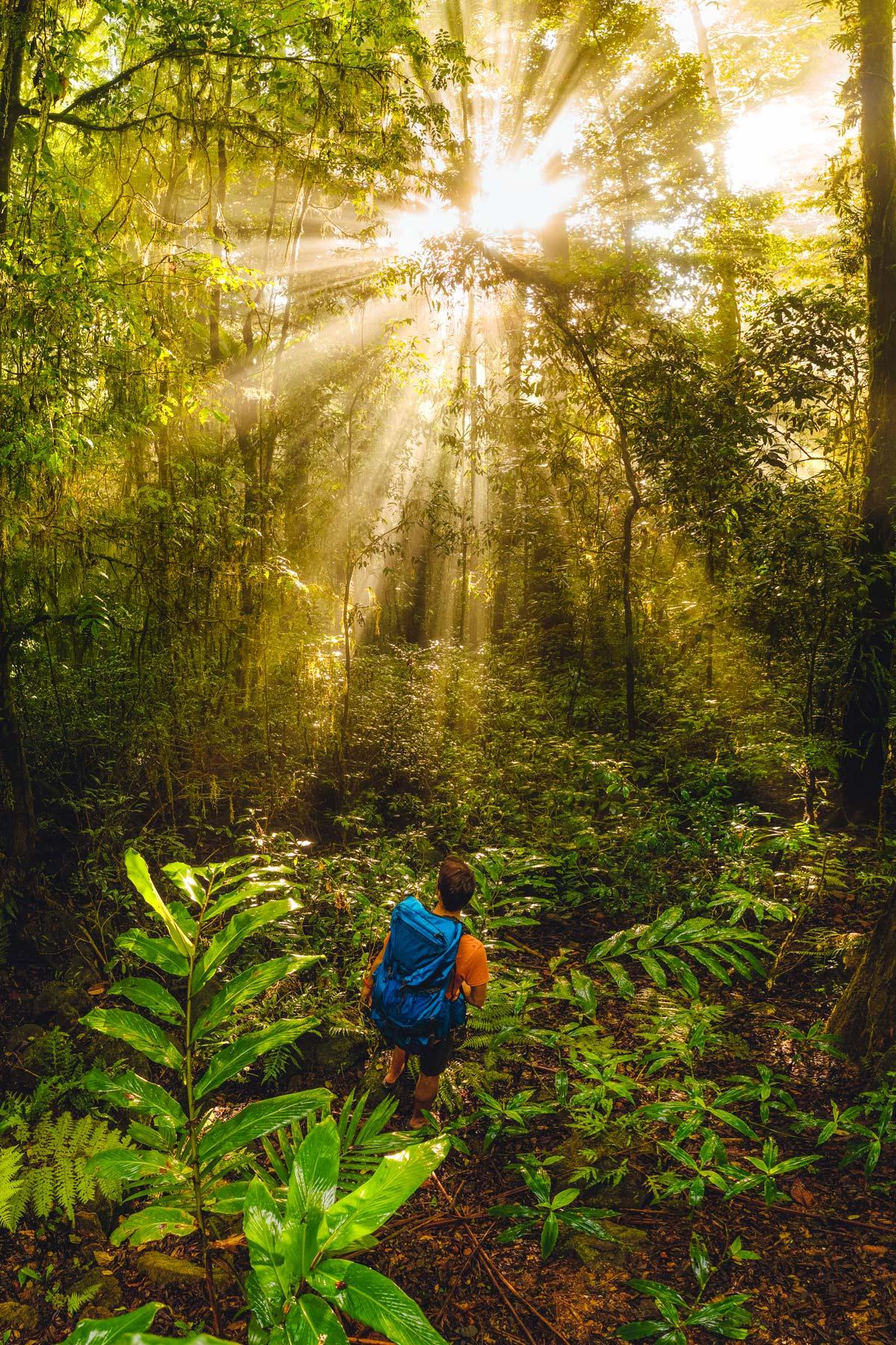 Daintree Rainforest Light Rays